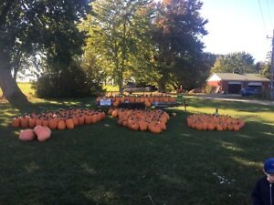 Pumpkins, gourds and honey for sale
