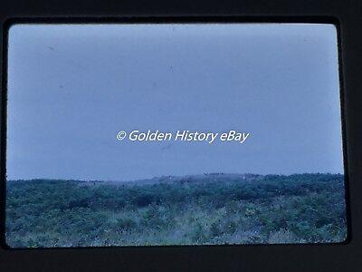 GULLS ON SKOMER ISLAND WALES   35mm SLIDE PHOTO PICTURE PHOTOGRAPH