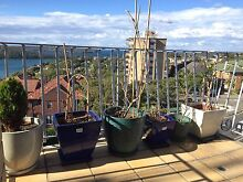 6 planters with plate base Mosman Mosman Area Preview