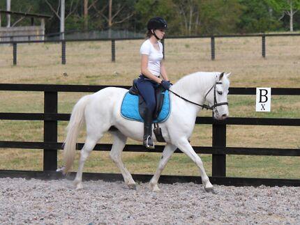 Pretty Australian Riding Pony