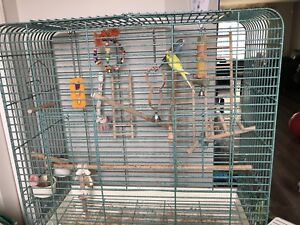 Birds and cage bagi