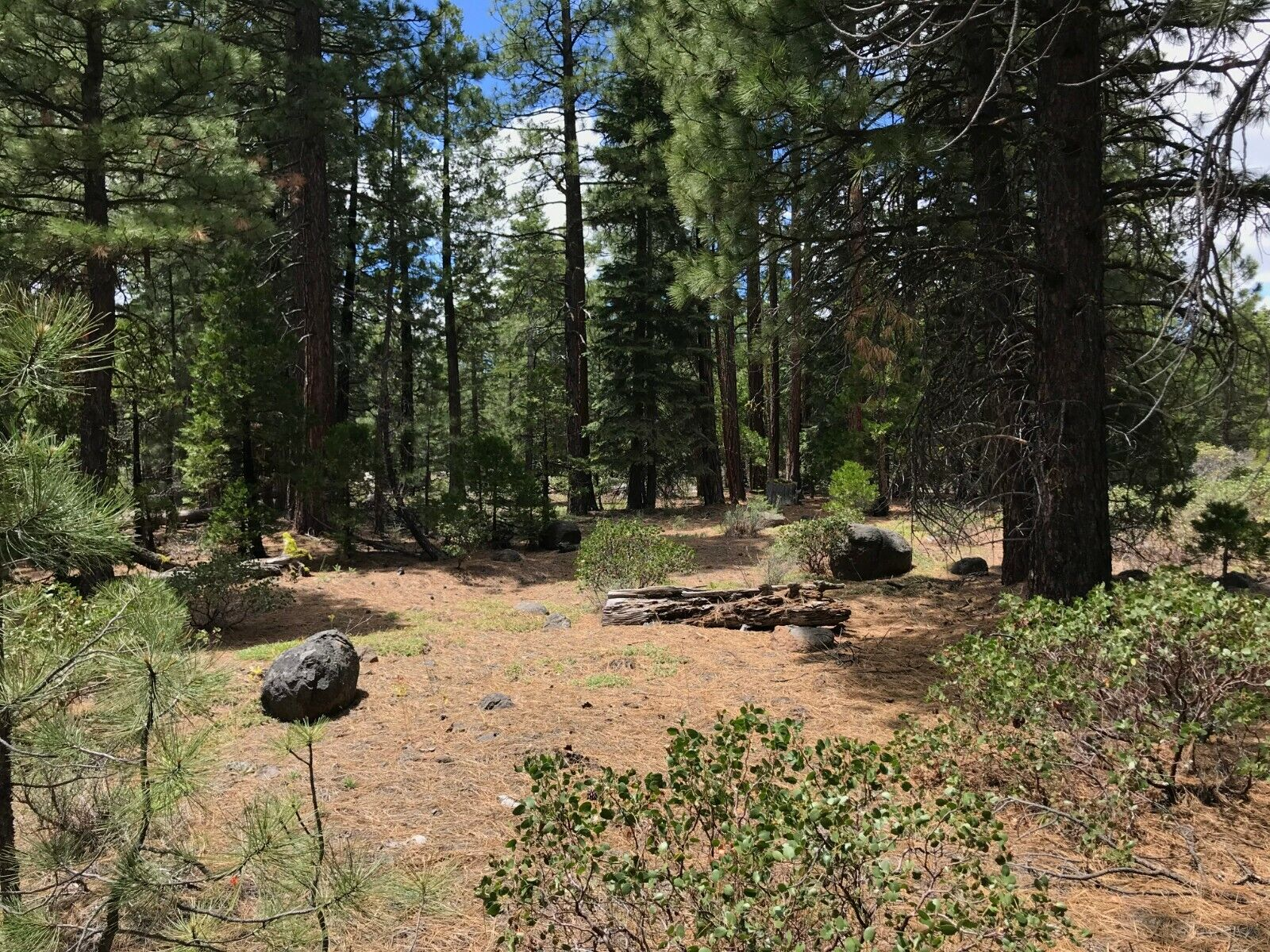 California Land For Sale - LG 1.421 Acres With Tall Trees & Level - Modoc County