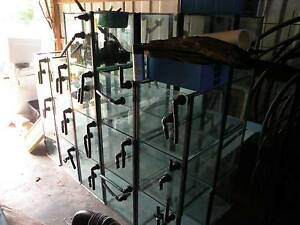 35 x 1.5' cube tanks with stand Breeding rack/shop display Strathpine Pine Rivers Area Preview