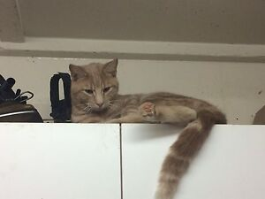 Cats looking for good homes