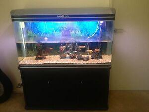 Large fish tank, accessories, fish Parklea Blacktown Area Preview