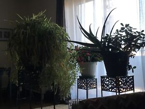 3 really large plants