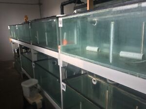 Fish tanks, aquaponics setup for sale