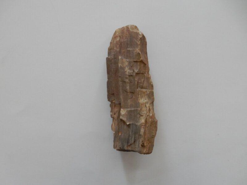 Petrified Wood Redwood from The Petrified Forest Calistoga Ca