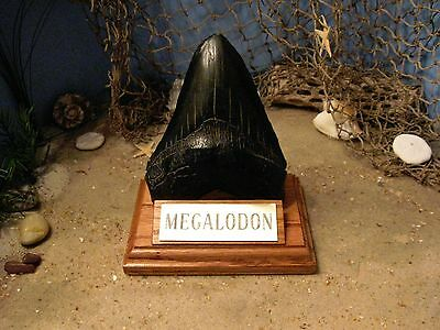 "MEGALODON SHARK TOOTH 5"" FOSSIL DISPLAY STAND ENGRAVED PLAQUE Tooth Not Included"