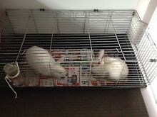 2 rabbits with cage & water bottle Gilles Plains Port Adelaide Area Preview