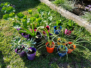 Assorted plants Southern River Gosnells Area Preview
