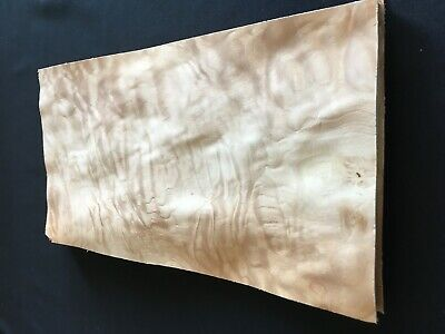 Quilted Curly Maple Burl Raw Wood Veneer Sheets 8.25 X 16.5 Inches 142nd Lot 48