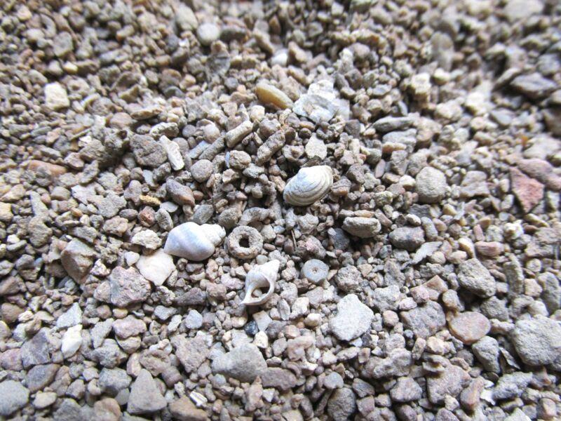 MICROFOSSIL Sand Gravel KENTUCKY micro fossils soil River Sample 200ml, 10oz wgt