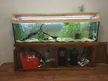 6 Foot Fish Tank and full set up (fish and live plants included) Westmead Parramatta Area Preview