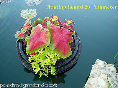 Pot Pond Plants - 20