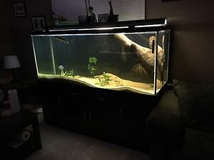 260g fish tank with stand and all accessories