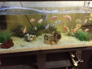 Complete set up 4ft fish tank with stand n accessories Manjimup Manjimup Area Preview