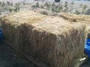 FREE straw bales for garden mulch Coles Bay Glamorgan Area Preview