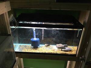 3x 33gl. Fish tank rack