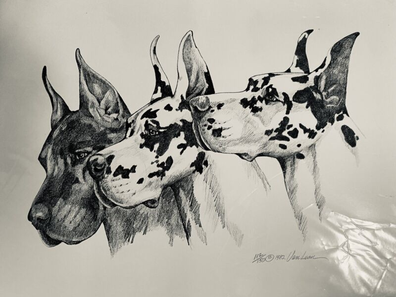 Great Dane Limited Edition Print Signed And Numbered By Van Loan