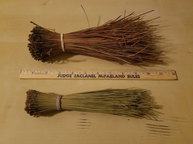 """2 LBS LONGLEAF PINE NEEDLES FOR COIL BASKETRY WEAVING & CRAFTS 8"""" to 10"""" LONG"""