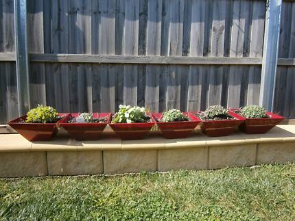 red hanging pots with succulents Prospect Vale Meander Valley Preview