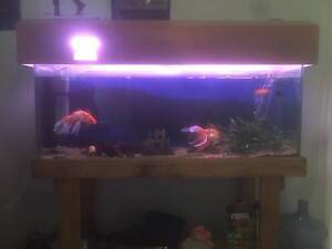 Fish Tank 4ft (fish x6, snail and water plants included) Mullaloo Joondalup Area Preview