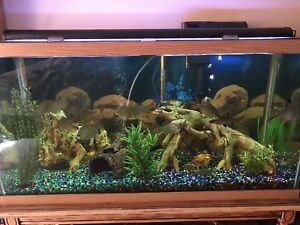 90 gallon tank with fish