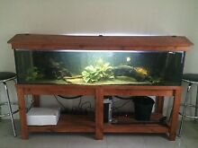 6ft fish tank with all accessories NEED GONE ASAP!!! Caboolture Caboolture Area Preview