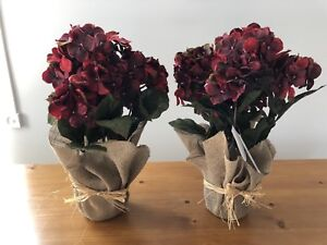 Hydrangea kijiji in calgary buy sell save with canadas 1 two dark silk red hydrangea plants mightylinksfo