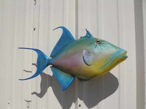 """23"""" Queen Triggerfish Two Sided Fish Mount Replica - 10 Business Day Production"""
