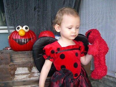 2 pc Cute wing Ladybug LOVE BUG Red Black Girls Halloween Costume Dress size (Love Bug Kostüm)