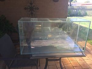 Fish/Turtle/Reptile Tank Panorama Mitcham Area Preview