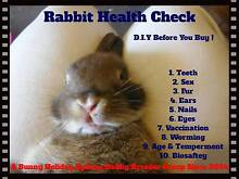 ★ How To Buy A Rabbit & Baby Netherland Dwarf Rabbits Ready Now★ West Pennant Hills The Hills District Preview