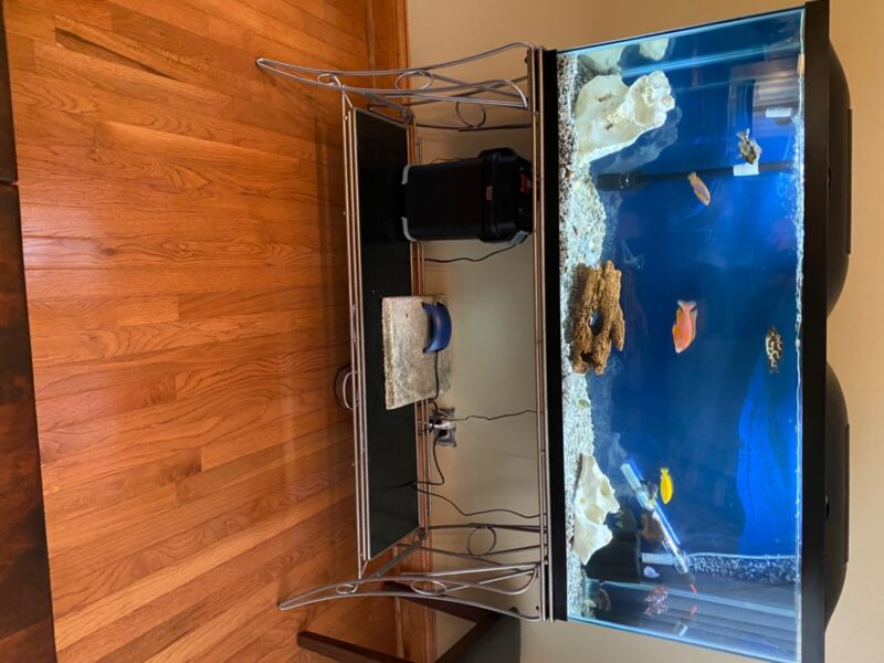 2- 55 gallon fish tanks w/ stands for both.