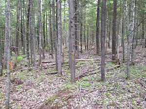 50 acres  10 min from tatamagouche