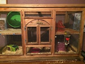 2 male hamsters + accessories
