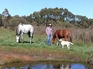 Horse Trainer McLaren Flat Morphett Vale Area Preview