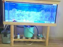 Home Aquarium/Fishtank Must Go ASSP......!!!!!! Dandenong Greater Dandenong Preview