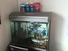 Tropical fish tank with 6 cool fish!! South Melbourne Port Phillip Preview