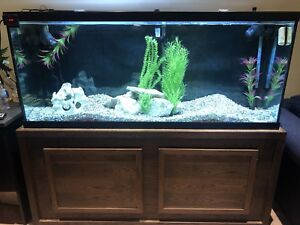 120 gallon aquarium