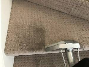 $5best price carpet & pest cleaner all areas