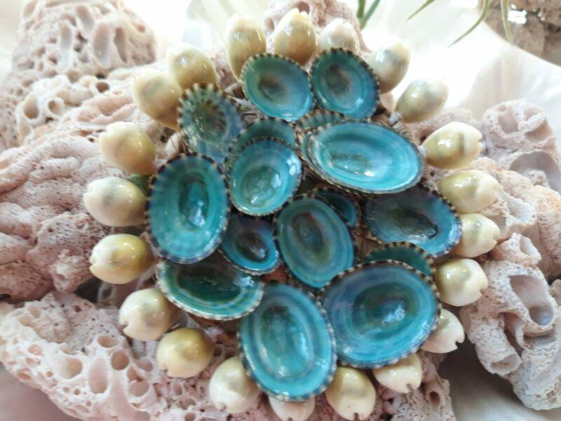 NEW!! Seashell (Acmaea) Varied Sizes Limpet Rich lush Aqua Green/Blue,60 pcs
