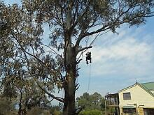 Impact Tree Services Molesworth Derwent Valley Preview