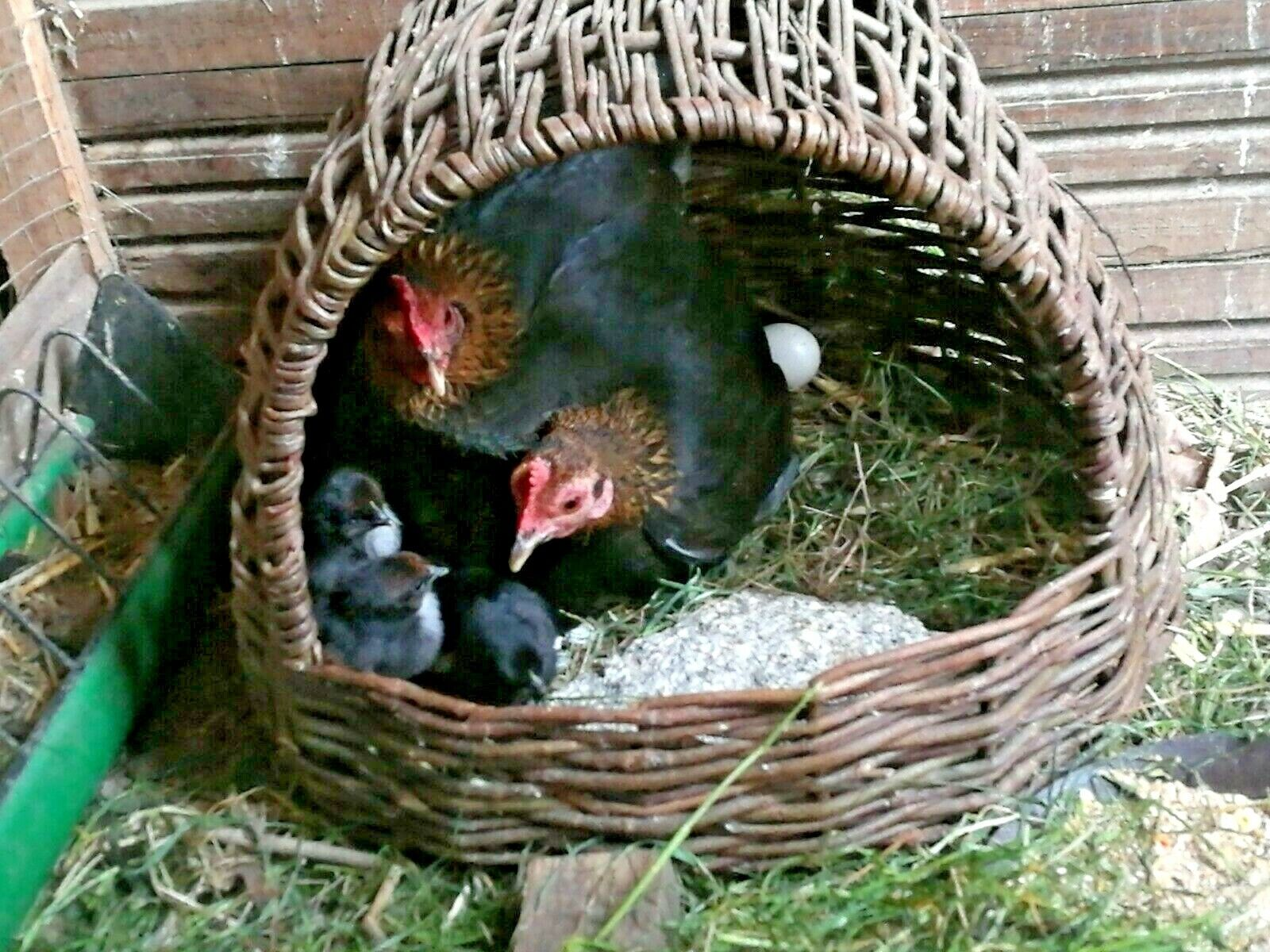 Legenest Ø 40 cm für 1 Huhn Hühner Nest für Bruteier Weide geflochten 🐔🐔