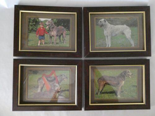 Irish Wolfhound framed vintage unused postcards