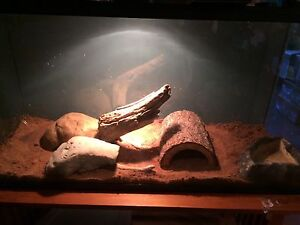 2 ball pythons + 90 gallon terrarium