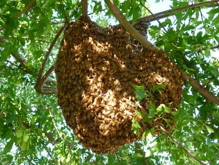 Bee Swarms Collection - Saving the bees