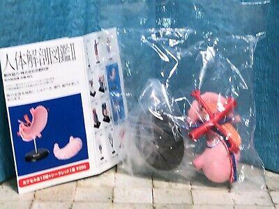 New Human Body Anatomy Miniature Figure Gastric Model Ver.2 Yujin Rare