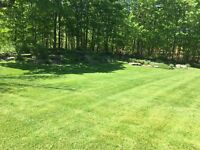 Spring Clean up and Lawn care